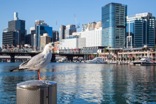 Darling Harbour District Area ...