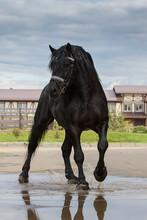 Black Horse On A Blue Sky Back...