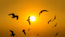 Sunset With Silhoutte Of Birds...