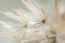Background Dry Wild Flower Macro