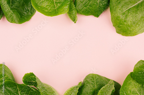Fresh leafy greens as decorative border on pink background.
