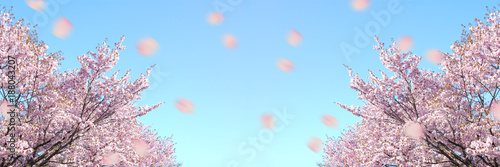 Tuinposter Lichtroze 北海道の桜