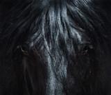 Andaluzyjski czarny koń z długą grzywą. Portret z bliska. - 188062845