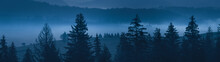 Wide Panorama. Night Mysterious Landscape In Cold Tones - Silhouettes Of The Spruce Trees On The Mountain Hills Against Foggy Valley.