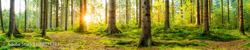Foto auf Gartenposter Wald Panorama of a beautiful forest at sunrise