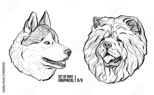 Set Of Portraits Of Dogs Breeds Husky And Chow Chow Graphical
