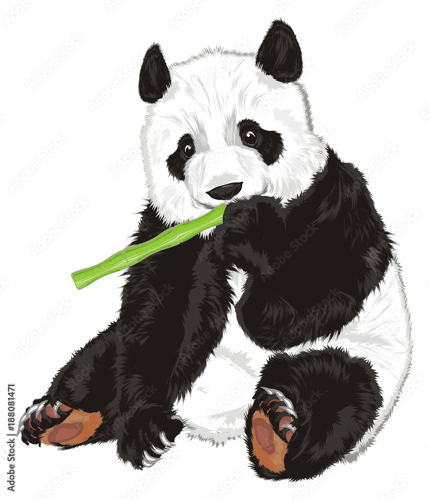 panda, bear, animal, China, zoo, bamboo, illustration, cartoon, toy, nature, cute, sit, Asia, eat, hold, green, food