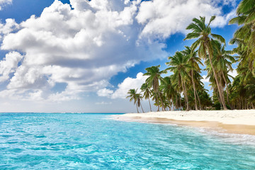 Paradise beach. Tropical paradise, white sand, beach, palm trees and clear water