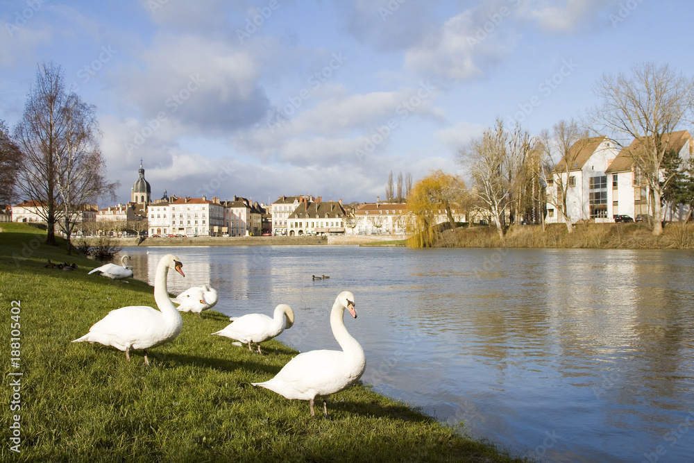 Swan in Chalon sur Saone, France.