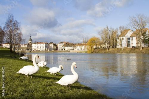 Swan in Chalon sur Saone, France.