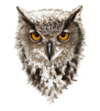 Angry Owl With Ears And Yellow...