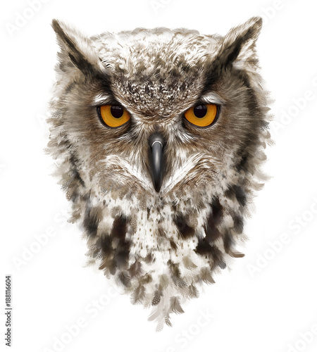 angry owl with ears and yellow eyes, feathers