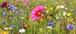Leinwandbild Motiv Jachère fleurie