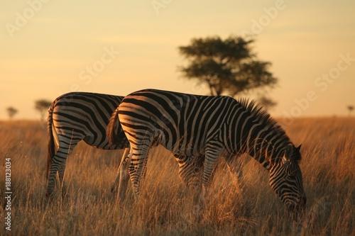 Foto op Plexiglas Afrika Animals of South Africa National Parks