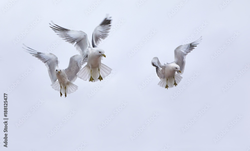 Seagulls in air