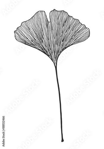 Obraz Ginkgo leaf vector black on white background  - fototapety do salonu