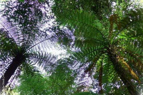 Poster Océanie Under the fern