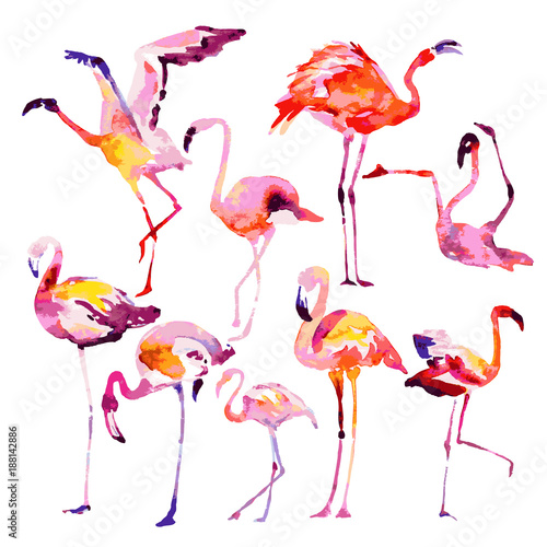 Spoed Foto op Canvas Flamingo Beautiful watercolor flamingos, isolated on a white. Big set.