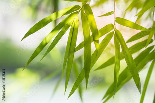 Foto auf AluDibond Zen bamboo leaves background