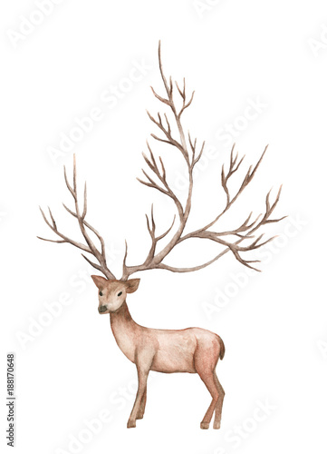 Fotobehang Hert watercolor illustration isolated deer, big antlers, mountain tree branch