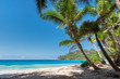 Tropical sandy beach with beautiful coconut palm. Summer vacation and holiday travel concept.