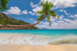 Coconut palm over paradise beach and beautiful sea in tropical island. Summer vacation and holiday travel concept.