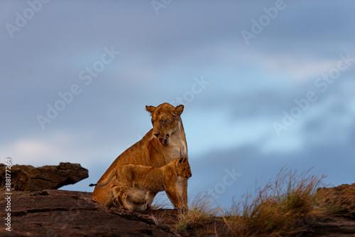 Fotografía  Lion female with cub on Sandriver Stones in Masai Mara, Kenya