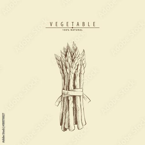 Photo hand drawn asparagus