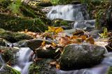 Balagan burn full of autumn leaves