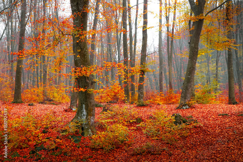 Garden Poster Forest Colorful autumn moment