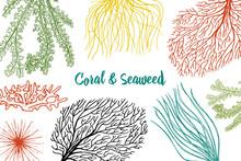 Marine Plants Seaweed Backgrou...