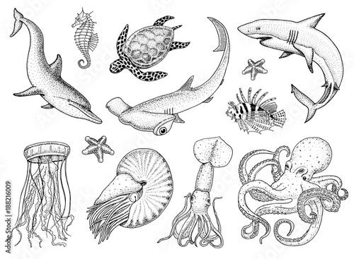 Fishes set or sea creature nautilus pompilius, jellyfish and starfish Canvas-taulu