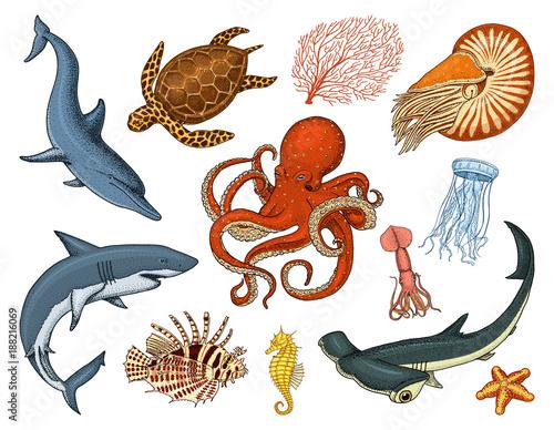 Valokuva Fishes set or sea creature nautilus pompilius, jellyfish and starfish