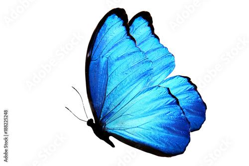 Foto op Canvas Vlinder синяя бабочка изолированная на белом фоне