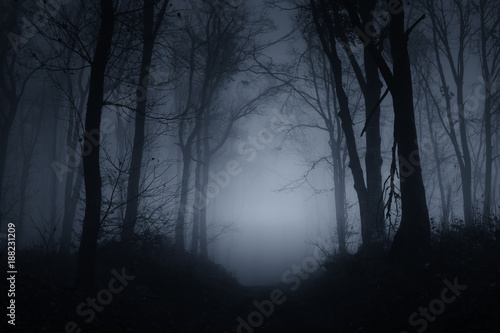 Fototapeten Wald dark scary forest road on foggy night