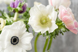 Close-up of a white anemones. Flowers of winter season. Stamens and pistils. Great light background. Macro.