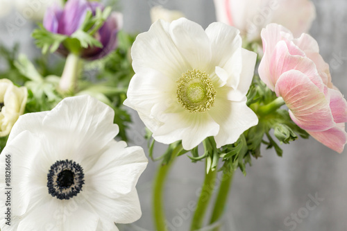 Close-up of a white anemones Wallpaper Mural