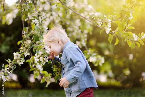 Fotografiet  Cute little boy enjoy blooming tree with white flowers in the domestic garden in