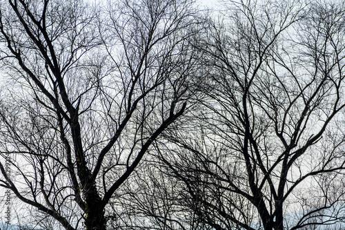 Fotografie, Obraz  treetops in autumn