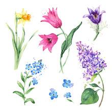 Spring Floral Set. Collection ...