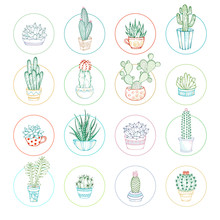Vector Linear Cacti And Succul...