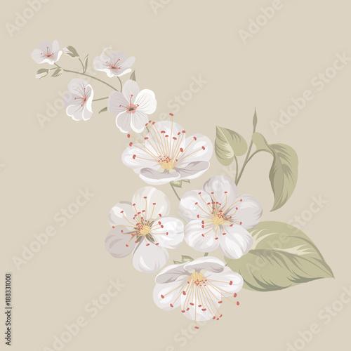 White cherry blossom flowers or sakura twig isolated on biege white cherry blossom flowers or sakura twig isolated on biege background flower spring invitation stopboris Image collections