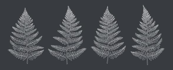 Panel Szklany Podświetlane Skandynawski Hand drawn leaf Set. Fern.