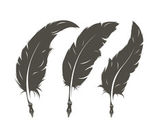 Set Of Three Isolated Feathers...