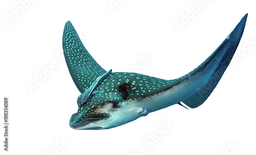 Spotted Eagle Ray isolated on white background