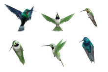 Set Of Songbirds Isolated On White. 3d Render
