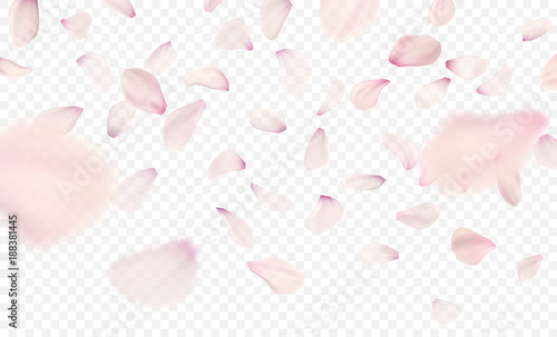 Obraz na plátně Pink sakura falling petals background. Vector illustration