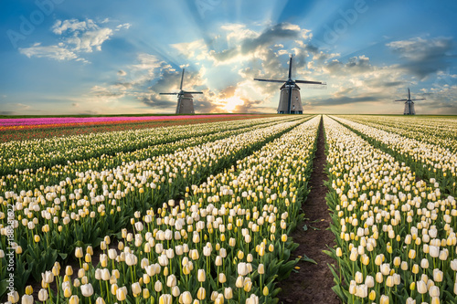 Landscape with tulip fields and windmill Canvas