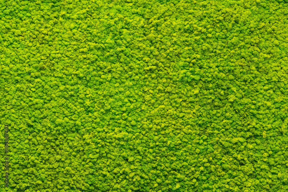 Fototapety, obrazy: green moss texture, background