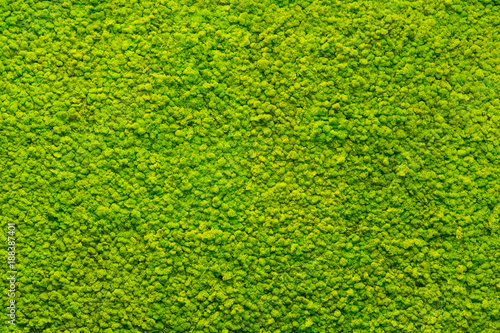 Obraz na plátne green moss texture, background